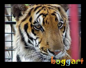 boggart Cebu City Zoo and Conservation Center