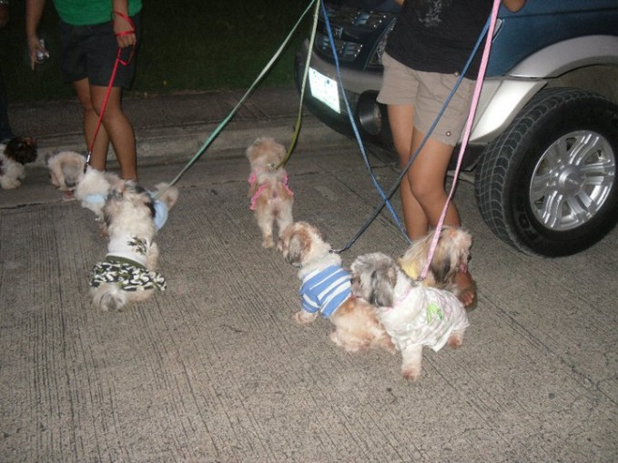 Cebu Shih Tzu Club