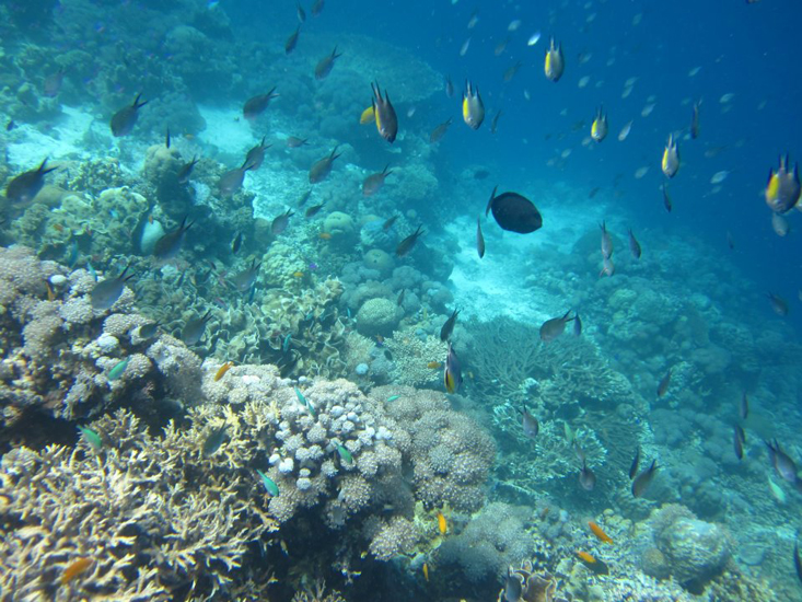 the island's rich underwater world! (image source: http://nalusuanislandresort.com/)